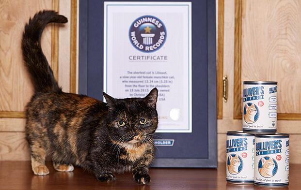 Самая маленькая кошка в мире. Зовут Лилипут. фото - http://www.guinnessworldrecords.com/
