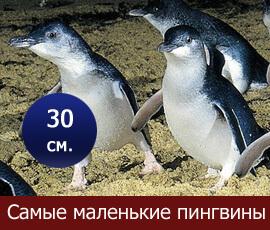 pingvin_baner
