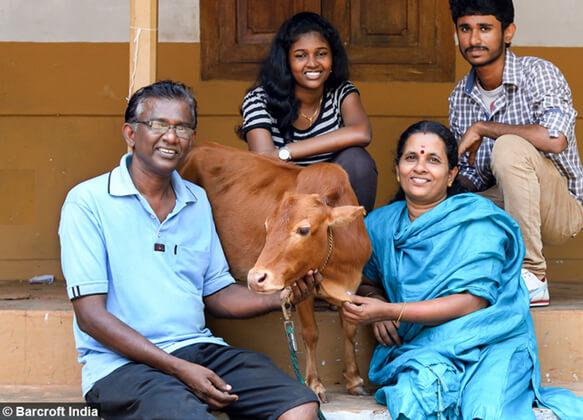 Самая маленькая корова в мире - Маникьям с хозяином, хозяйкой и их детьми.