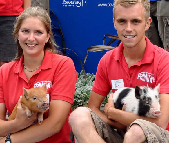 Карликовые свиньи в Англии. фото - http://www.pennywellpigs.com