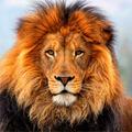 leoava