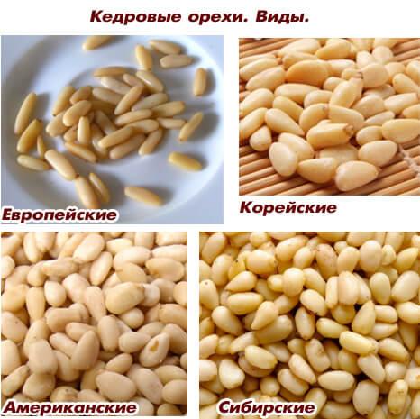 Самые маленькие орехи в мире - Кедровые орехи. Кедровые орехи. Виды: Европейские, Корейские, Американские, Сибирские.