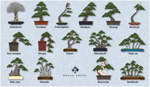 Бонсай. Стили деревьев.