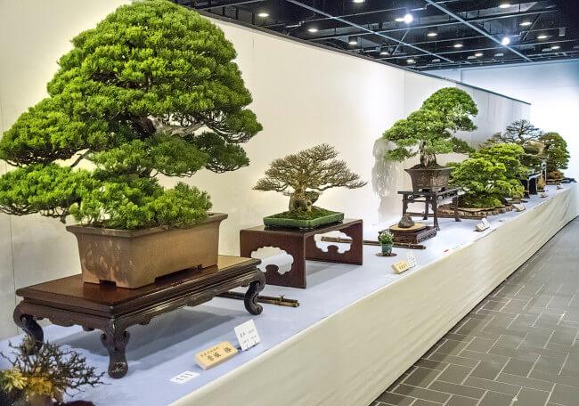 Выставка деревьев Бонсай