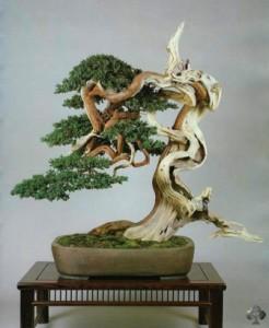 Мертвая древесина, или дерево, лишенное коры - шаримики (Sharimiki)