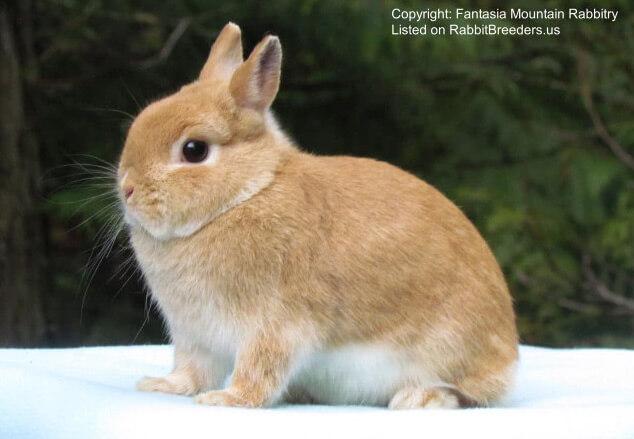 Маленькие кролики. Карликовые домашние породы кроликов. Цветной карлик
