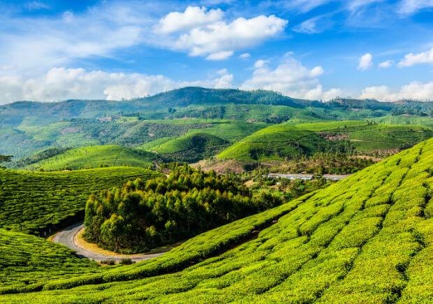 Индия. Штат Керала. Чайные плантации В Муннаре. Самые большие по территории страны мира. Топ -10.