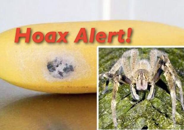 Самые опасные животные в мире. Топ-10. Бананы со следами яда Бразильского блуждающего паука.