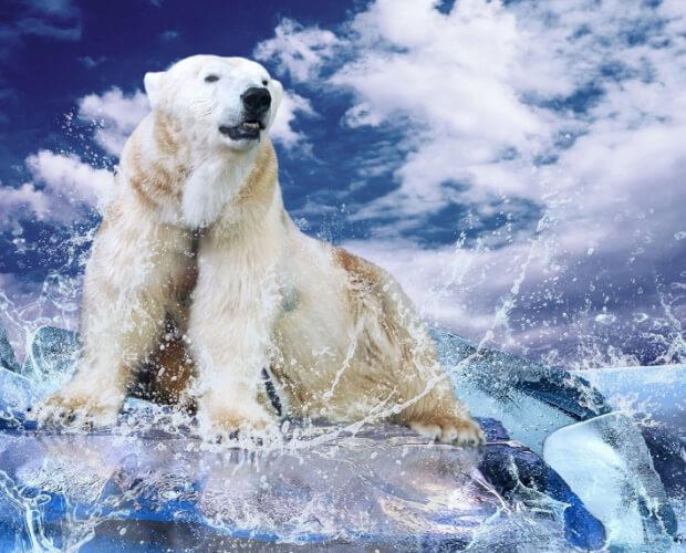 Самые опасные животные в мире. Топ-10. Белый медведь.