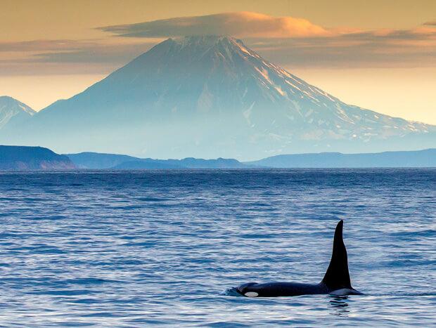 Тихий океан. Камчатка. Самый большой в мире океан.