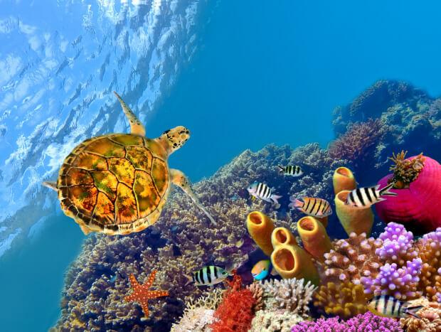Подводный мир Тихого океана.