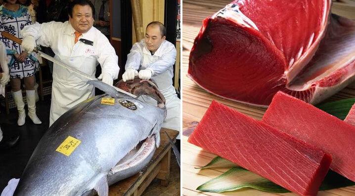 Самые дорогие в мире рыбы. Голубой тунец.