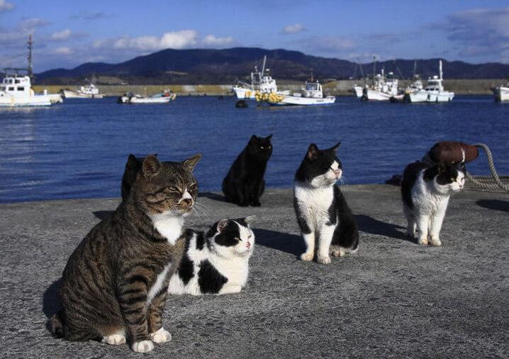 Остров Тасиро, Япония. Island Tashiro, Japan