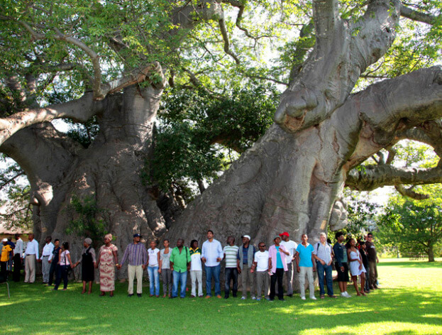 Баобаб, которому примерно 6 000 лет в ЮАР