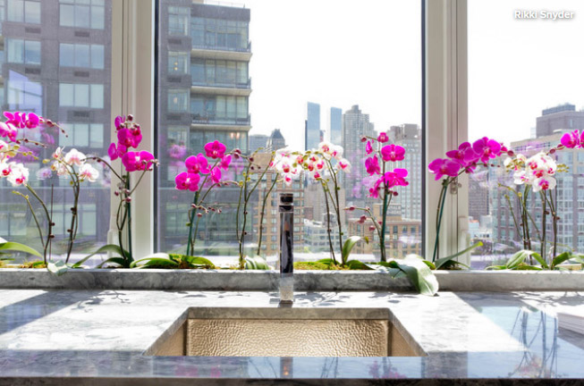 Orchids / Орхидеи. Цветущие комнатные растения. Описание и названия.