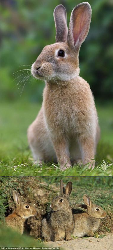 Заяц, Самые милые животные
