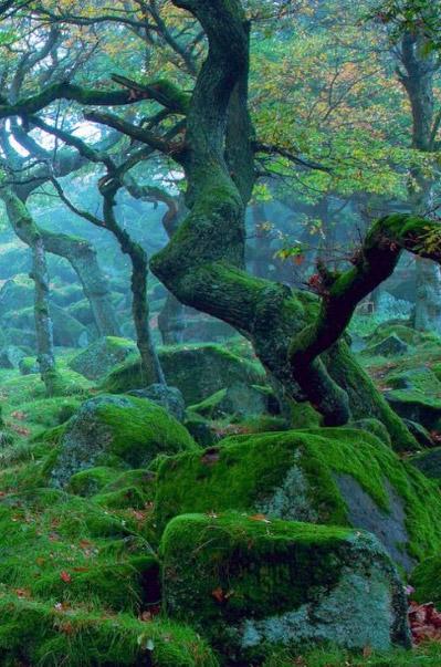Шервудский лес / Sherwood Forest. достопримечательности Англии
