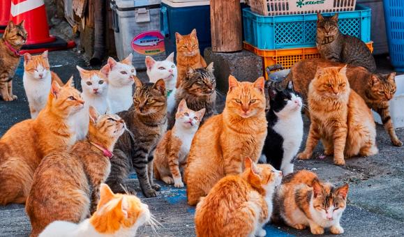 Факты о кошках
